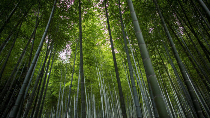 This picture taken on March 3, 2017 shows a bamboo forest near Longshan village near Lin'an, Zhejiang Province. / AFP PHOTO / Johannes EISELE (Photo credit should read JOHANNES EISELE/AFP via Getty Images)