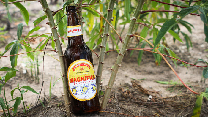 Magnífica beer, an affordable and sustainable beer is produced with cassava