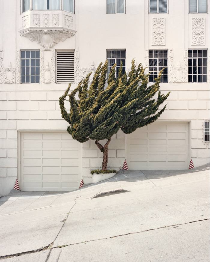 Untitled by Marc Alcock, from California Topiary