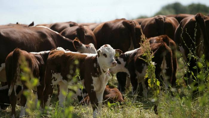 Animal husbandry is among the factors that are part of a metric developed by the Sustainable Food Trust
