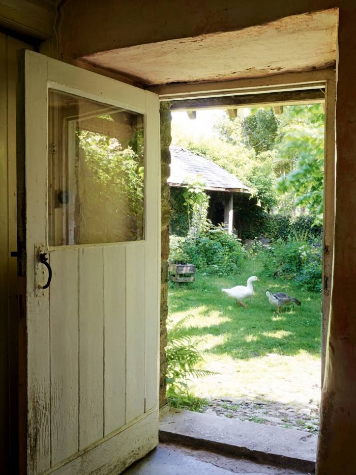 Guinea fowl and ducks inthe farmhouse yard