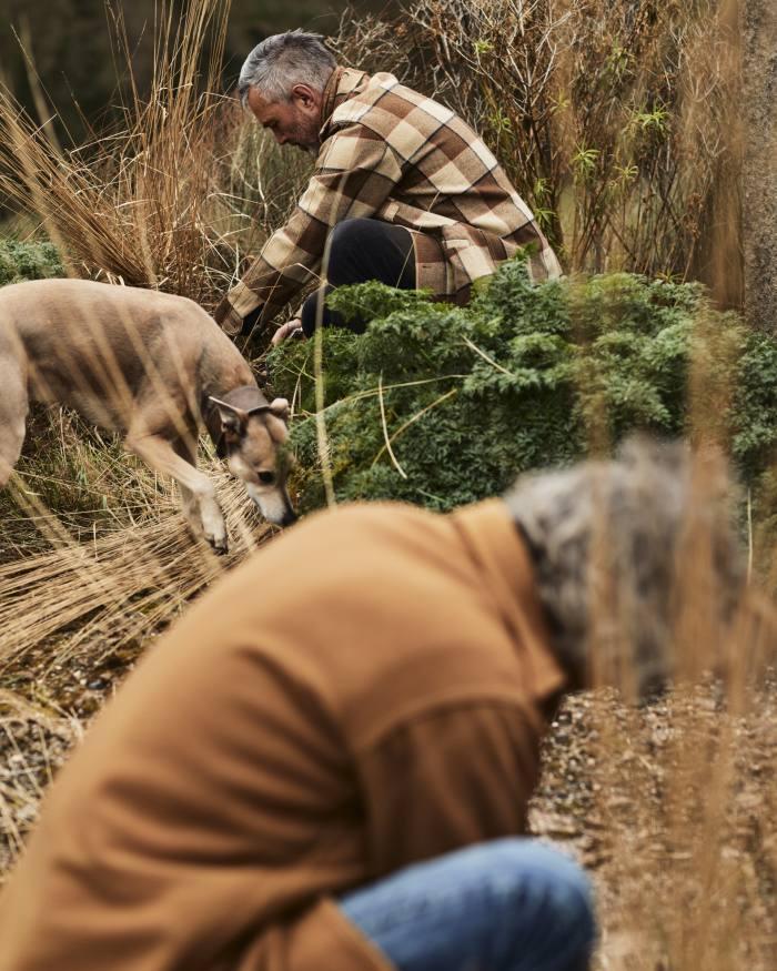 "Cutting back the ornamental grass Calamagrostis x acutiflora ""Karl Foerster"", with their lurcher, Woody"