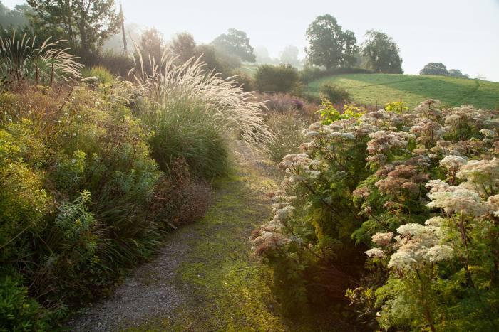 The ornamental grass Pennisetum macrourum and Selinum wallichianum (milkparsley) onthe lower path