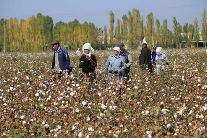 Uzbekistan's cotton growers walk in a cotton plantations outside Tashkent, on October 24, 2019