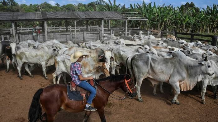 Brazil's cattle herd is the world's largest at 217m animals