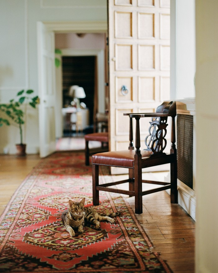 The artist Tarka Kings's cat Lucia (named after the writer Lucia Berlin) in the corridors of her home, Airlie Castle in Scotland
