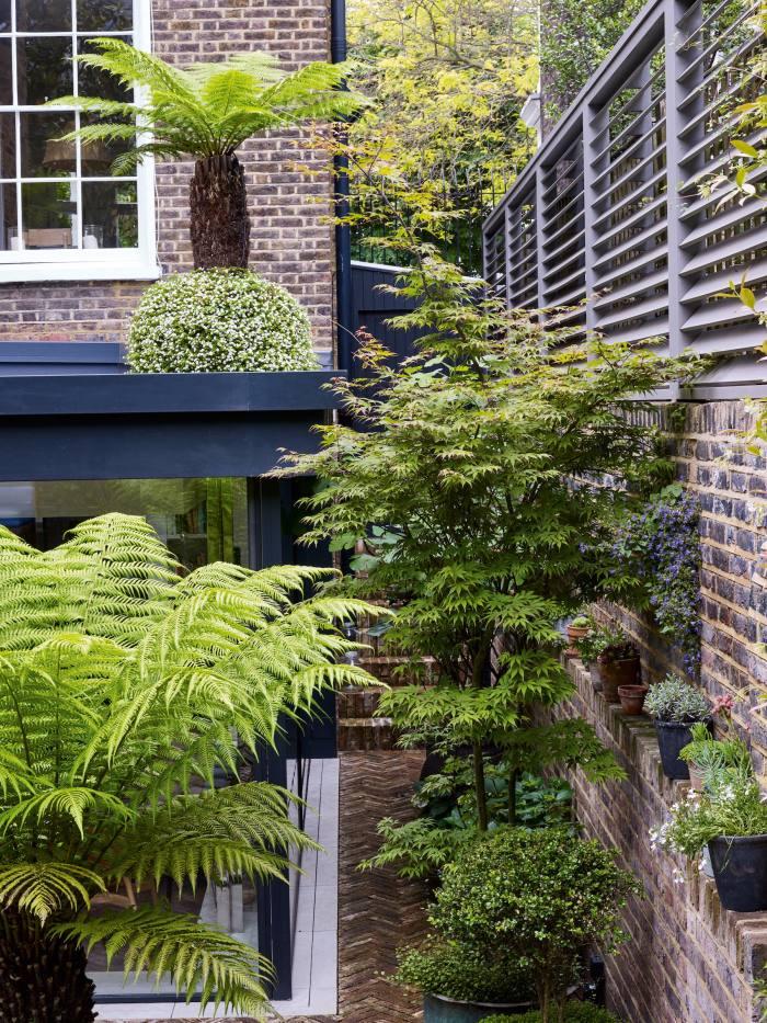 A garden in Kensington by Alasdair Cameron
