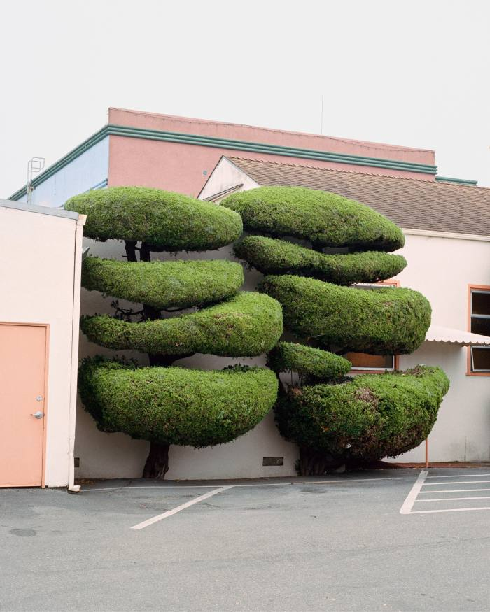 Hollywood Juniper by Marc Alcock, from his book CaliforniaTopiary
