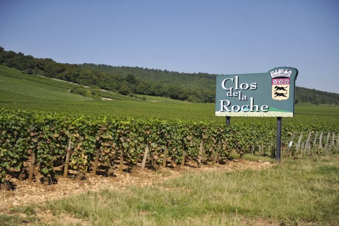 The Clos de la Roche vineyard in Morey-Saint-Denis,in theCôte-d'Or