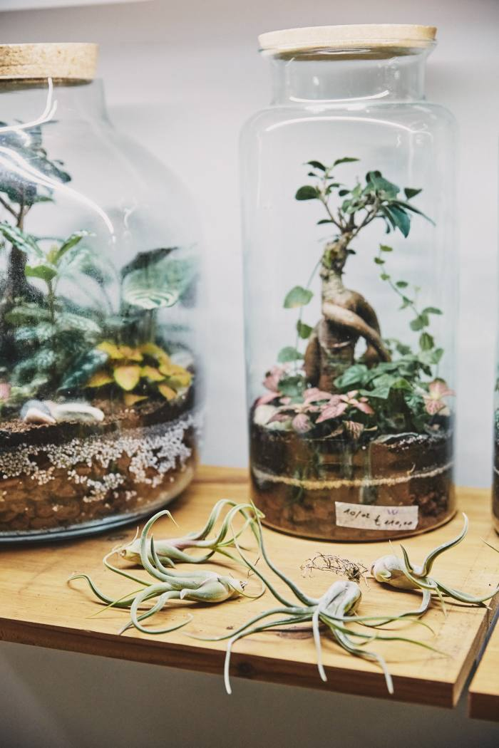Wild Milano hosts popular terrarium workshops