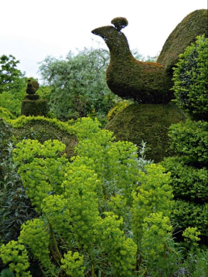Peacocks in Charlotte Molesworth's topiary garden in Benenden, Kent