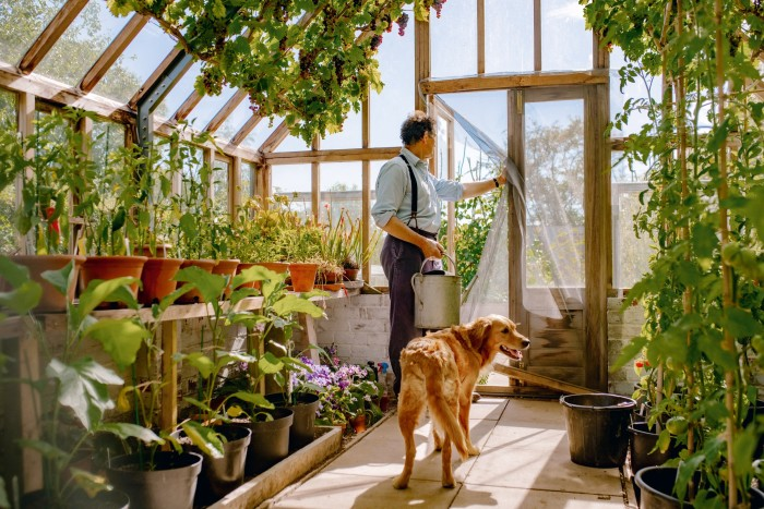 Don in his greenhouse with his golden retriever, Nellie
