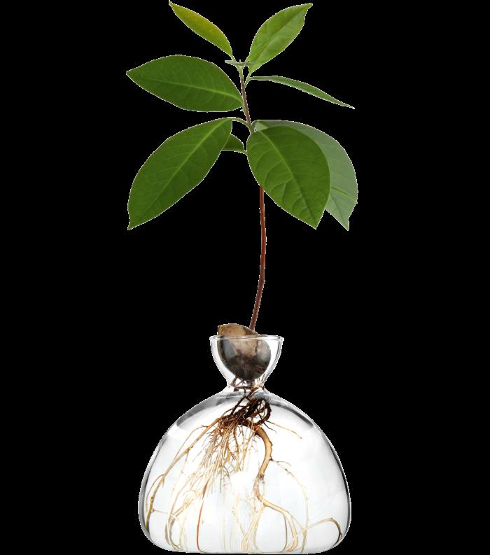 Ilex Studio avocado vase, £35, ilexstudio.com