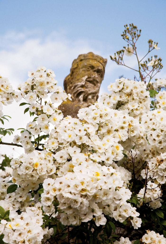 "A 17th-century statue of Neptune swathed in ""Bobbie James"" rambling roses at Hanham Court, near Bristol, as seen in Isabel and Julian Bannerman's book Landscape of Dreams"