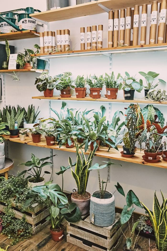 The Falcos give customers a questionnaire to establish which houseplant is the right one for them